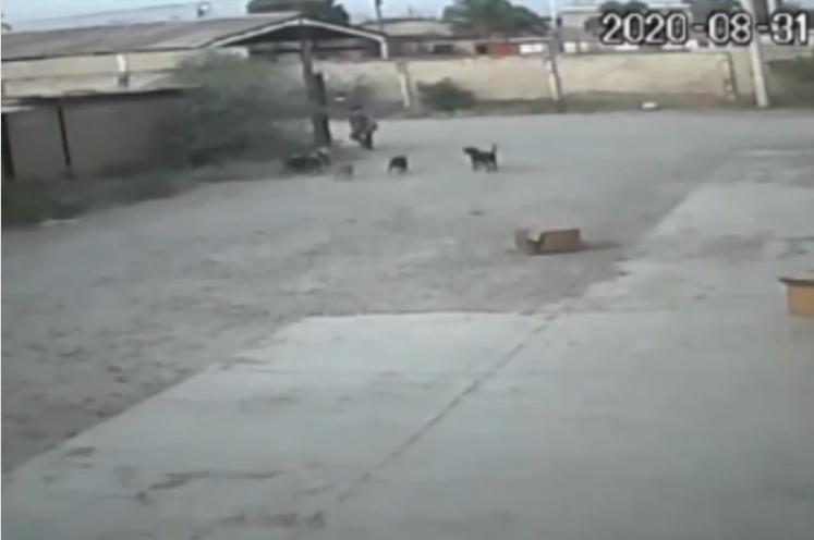 (Video) Perros en situación de calle atacan y quitan vida a hombre en Durango