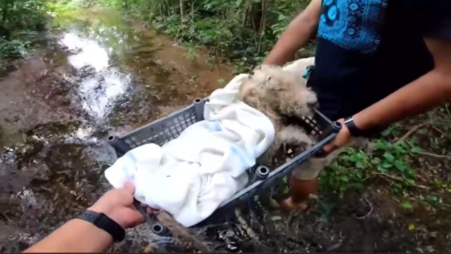 Proclaman justicia para Bruno, perrito que fue atado del hocico y patas || VIDEO