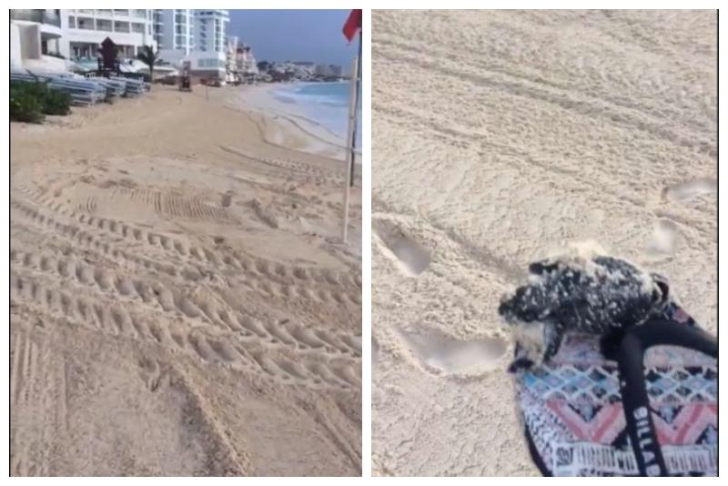 (VIDEO) Trabajadores aplastan los nidos de las tortugas