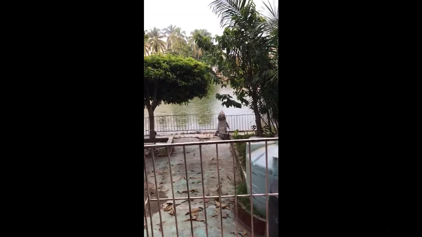 (Video) Cocodrilo salta valla metálica en Villahermosa