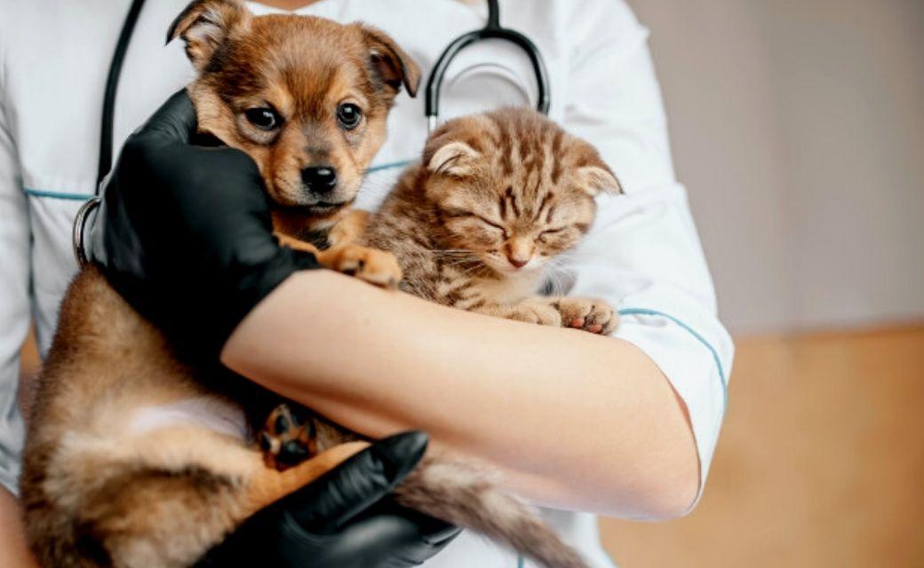 esterilizacion-perros-y-gatos