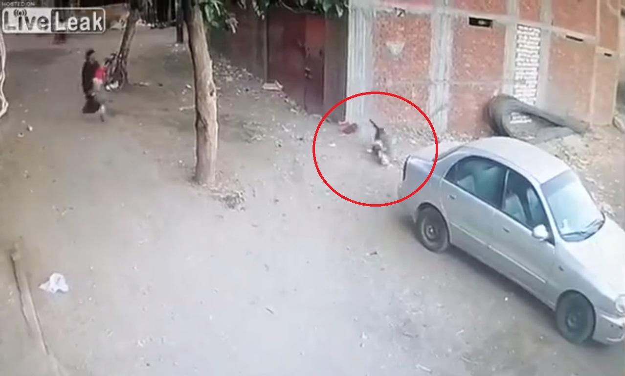 (Video) Gato enfrenta a un perro y salva a niño de un ataque