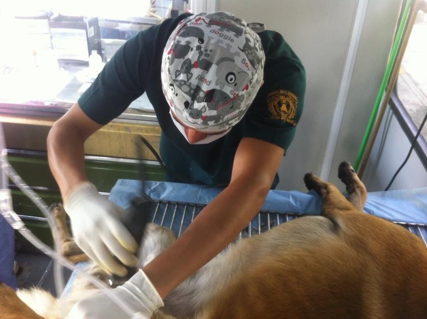 UAEMex esteriliza a tus perros y gatos gratis - Consulta la información aquí