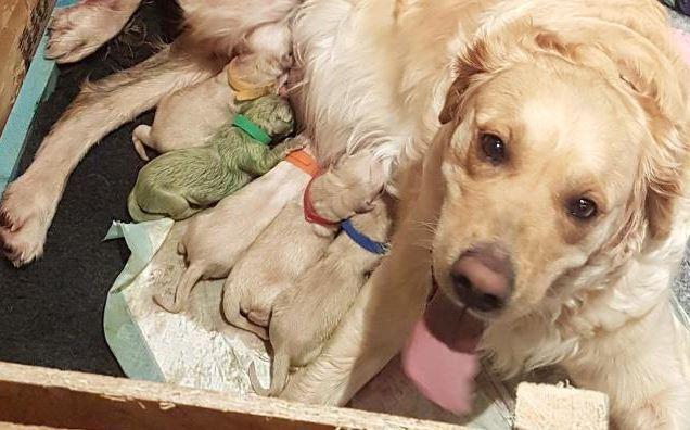 viral-nace-perrito-de-color-verde-se-llama-pistacho2
