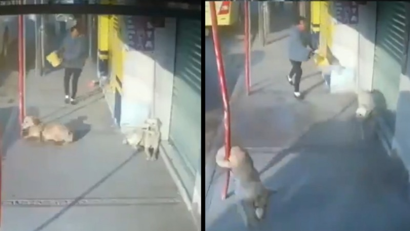 Mujer-lanza-cubetada-de-agua-a-dos-perritos-en-Toluca