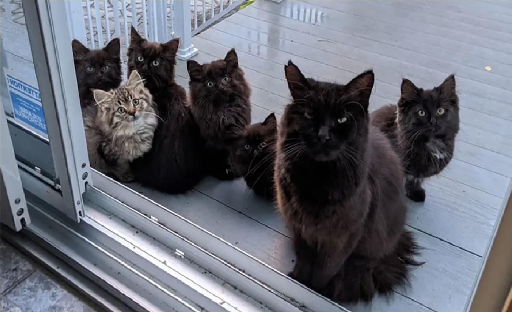 Una-gatita-callejera-llevo-a-sus-cachorros-con-la-mujer-que-la-ayudo