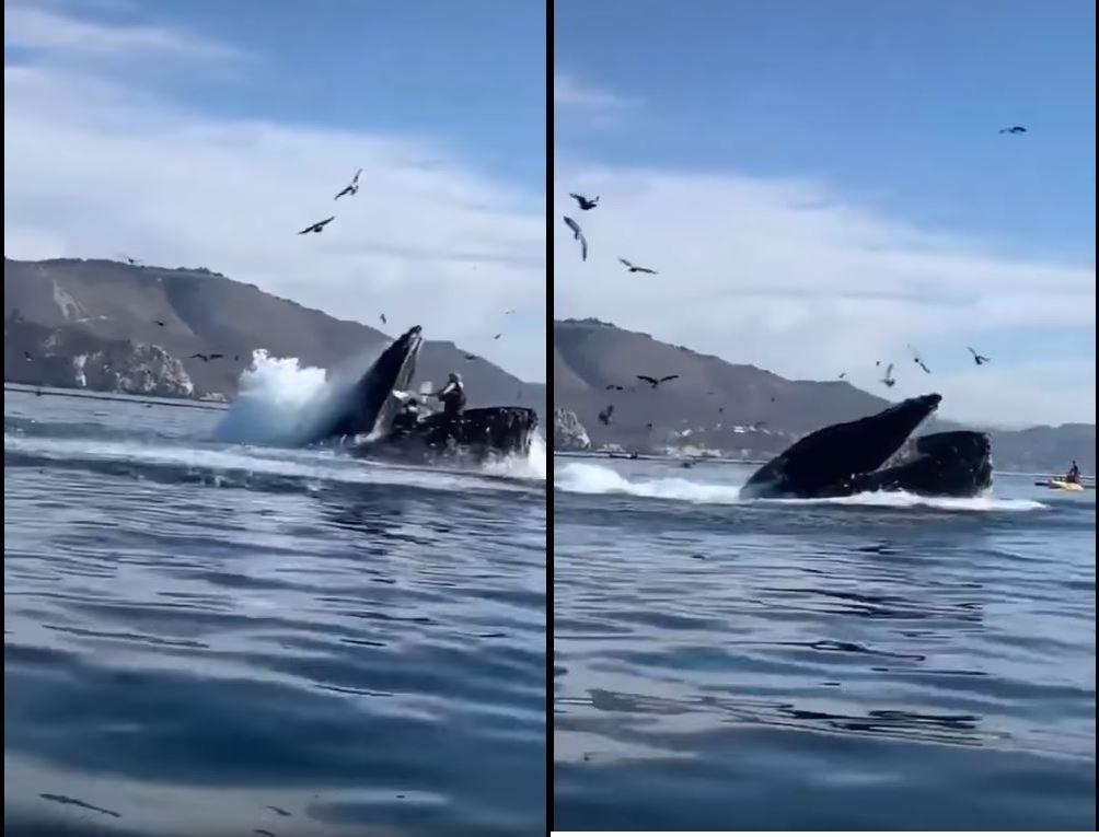 ballena-casi-se-come-a-dos-mujeres-en-california1
