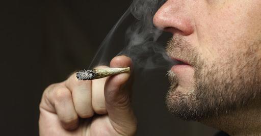 Conoce la empresa que ofrece sueldo de hasta 58 mil pesos mensuales por ser catador de marihuana