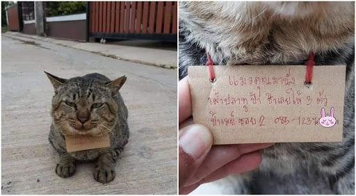 viral-gatito-desaparece-por-varios-dias-y-vuelve-endeudado2