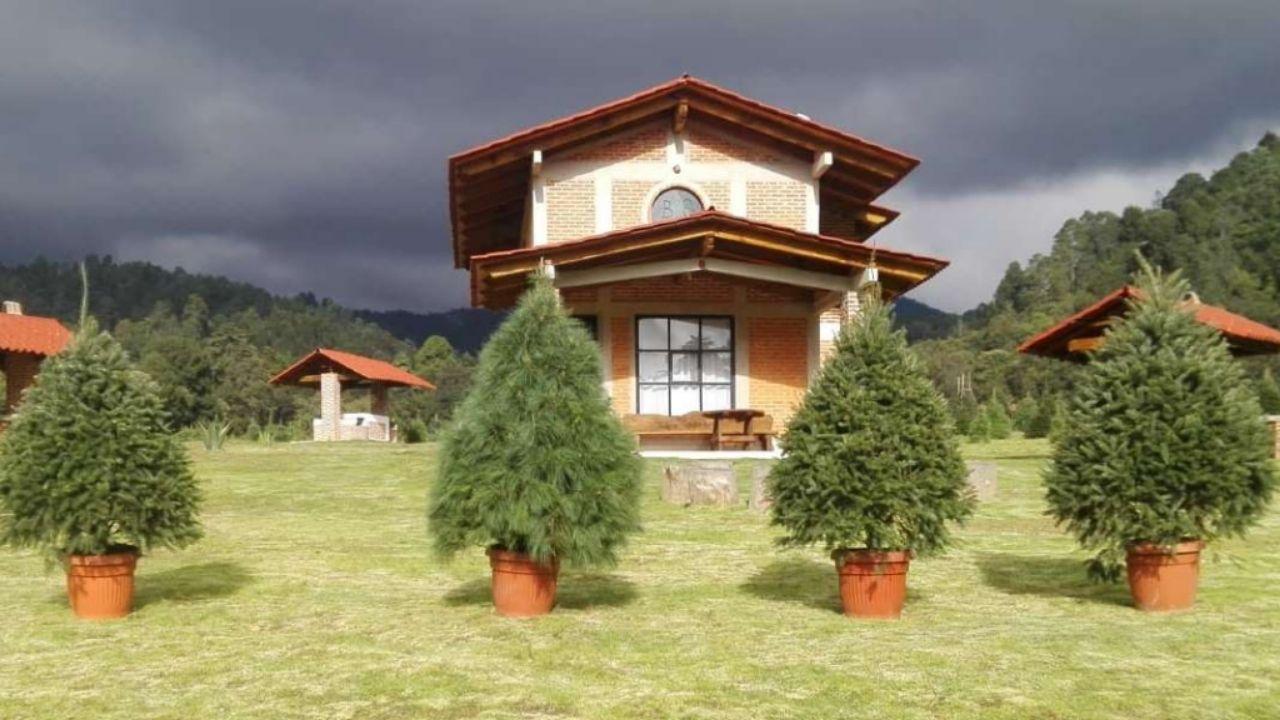 Iniciativa crea la opción de rentar tu árbol de navidad