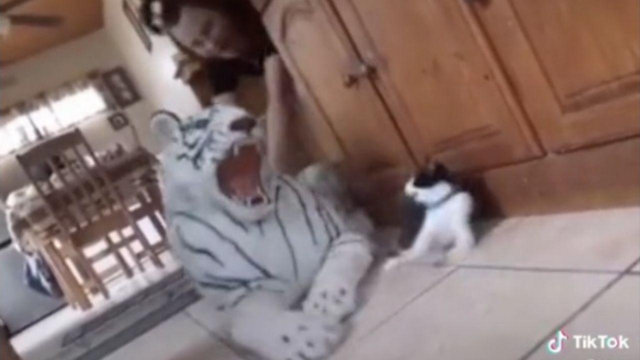 Mujer-casi-le-provoca-un-infarto-a-su-gato-por-broma