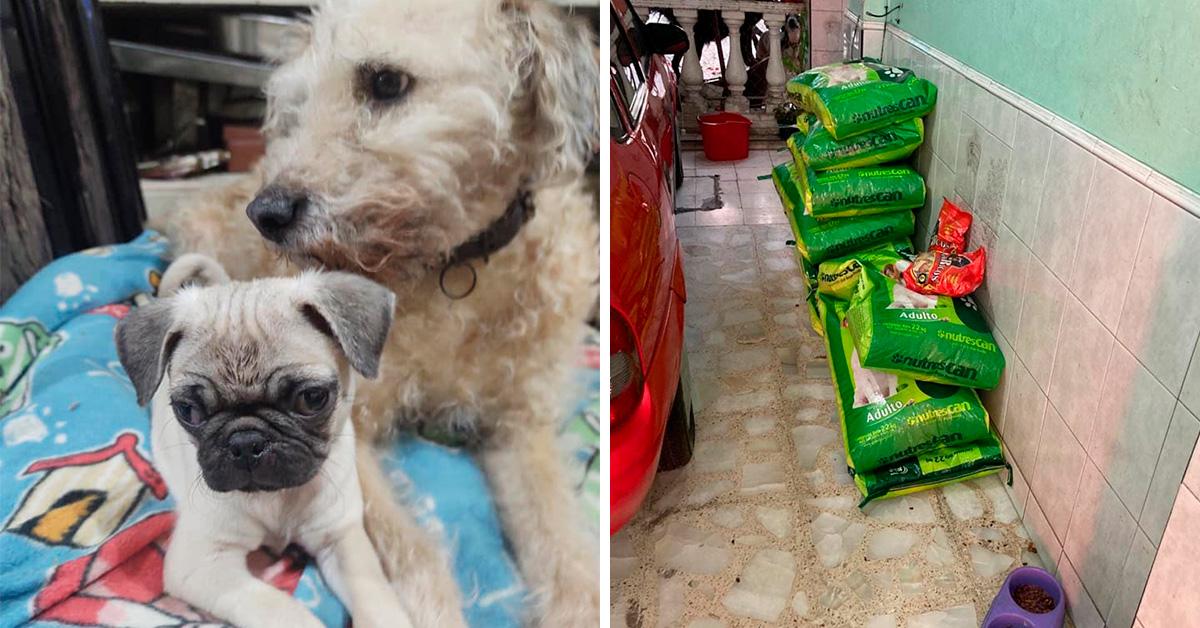 edomex-albergue-pide-apoyo-para-darles-de-comer-a-sus-perritos-3-160494