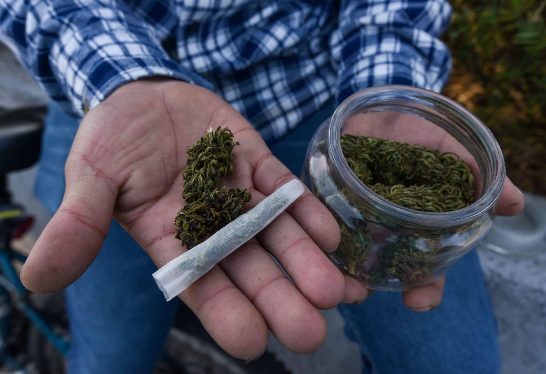 uso-medicinal-del-cannabis-reconocido-por.-organizaciones-mundiales