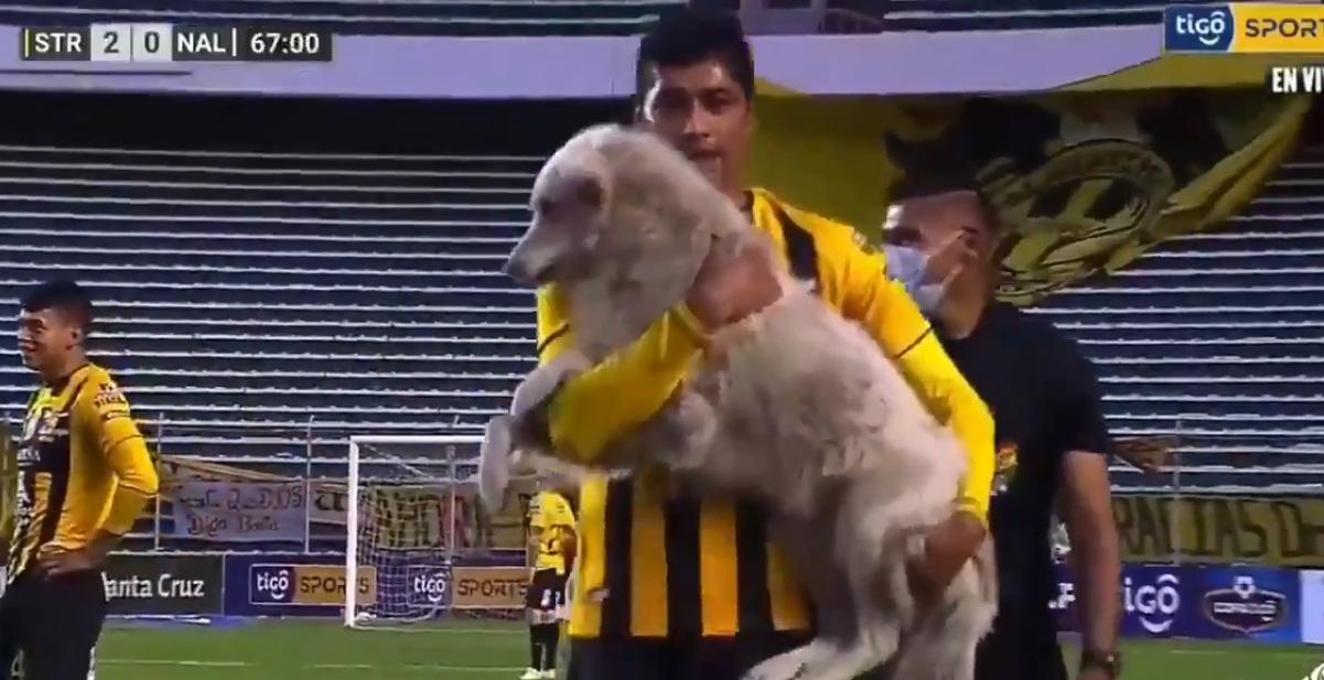 Video II Perrito en pleno partido de fútbol roba los tachos de un futbolista