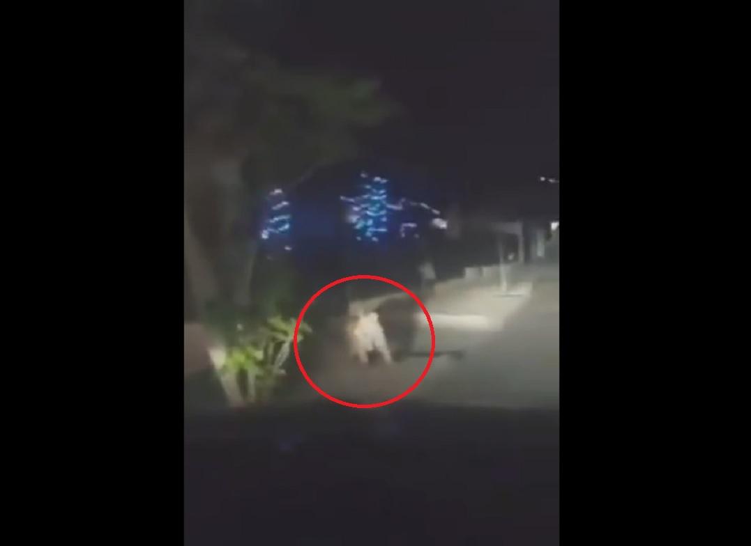 (Video) Tigre de bengala pasea por calles de Ciudad Juárez