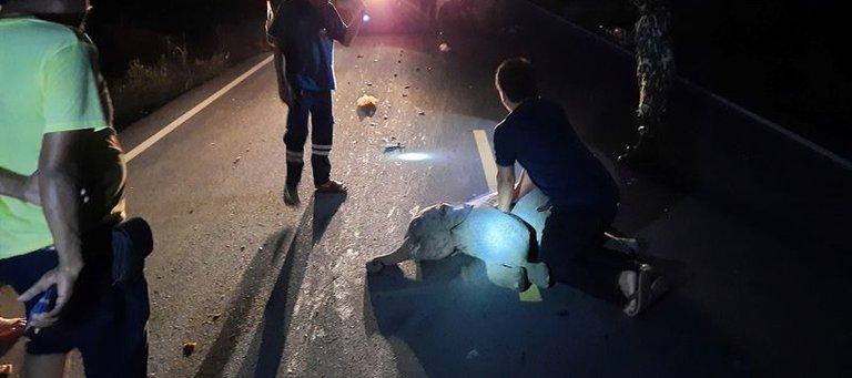 Viral: Moto atropella a bebé elefante cuando cruzaba la carretera