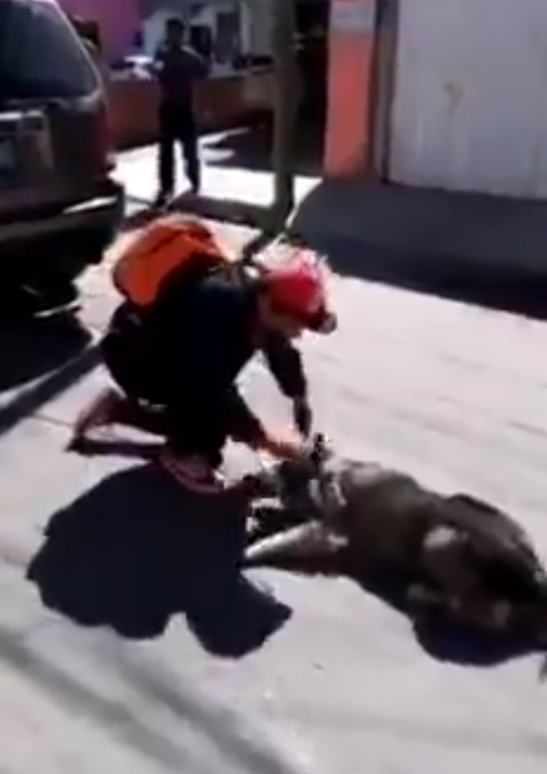 mujer-arrastra- perro
