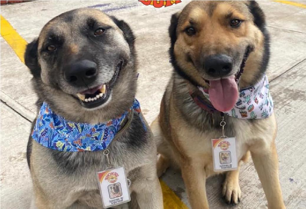 Restaurante de Toluca da trabajo a perros en situación de calle