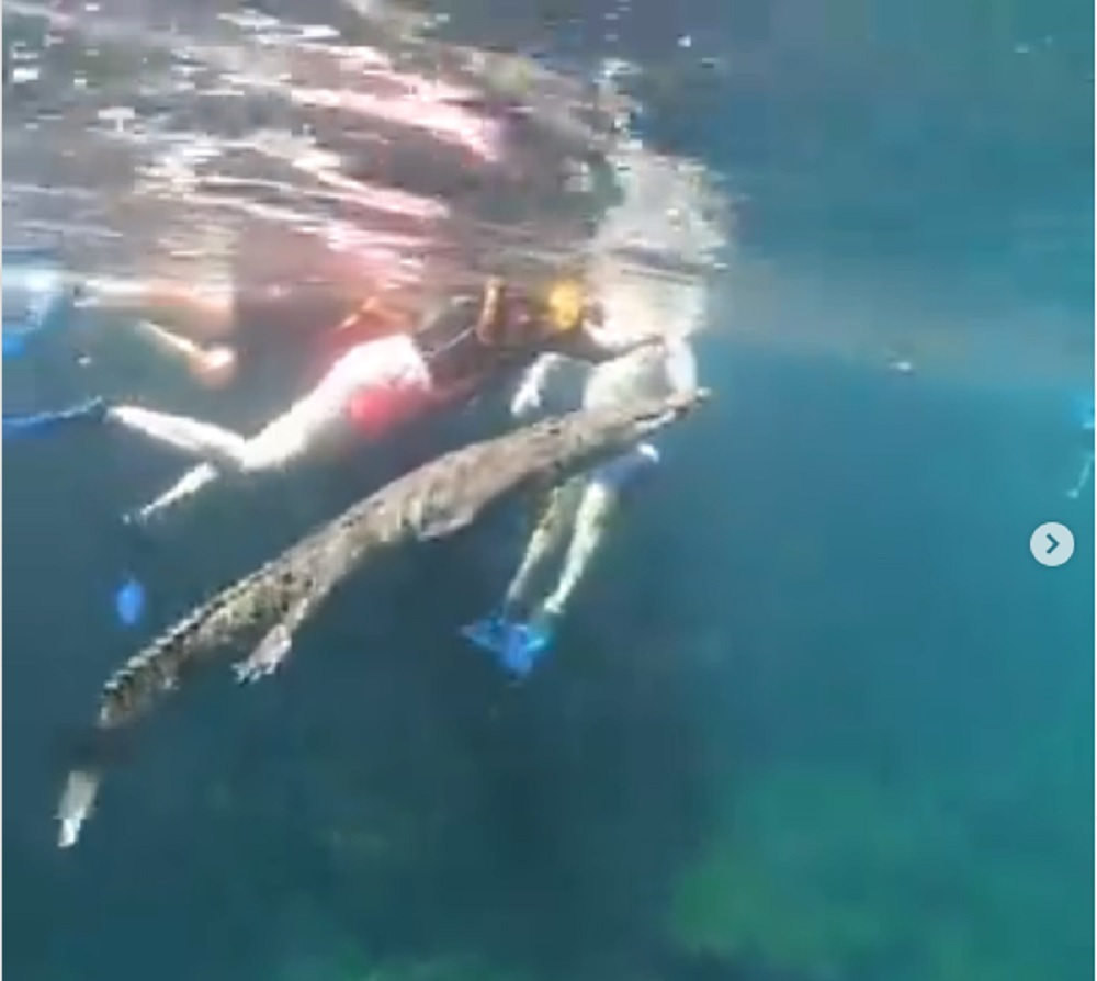 Video || Cocodrilo nada con turistas en cenote de Tulum