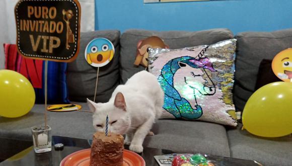 viral-por-asistir-al-cumpleanos-de-un-gato-invitados-se-contagian-de-coronavirus-160494