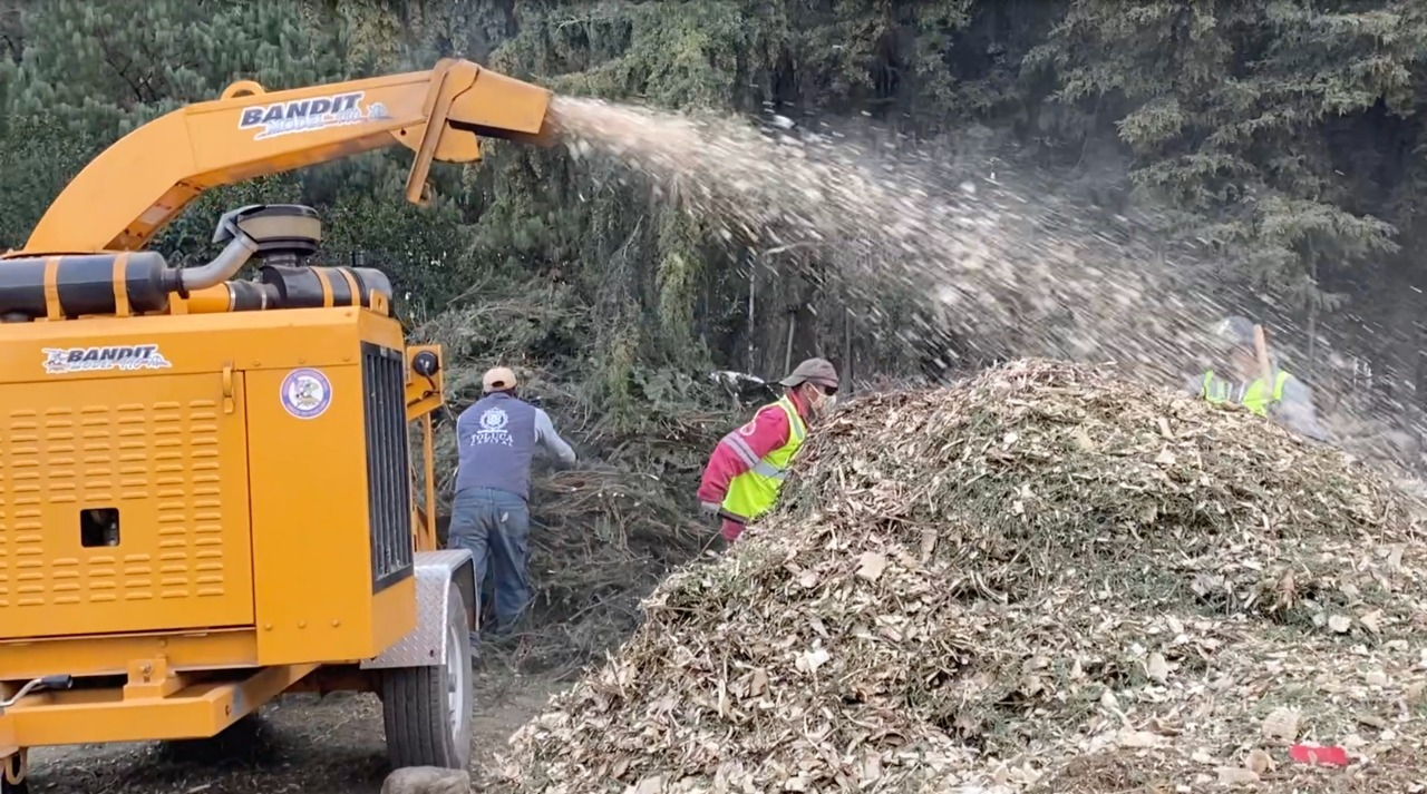 La composta hecha a base de los árboles recolectados servirá para nutrir los árboles de reciente plantación y en la producción de planta en el vivero municipal de la capital.