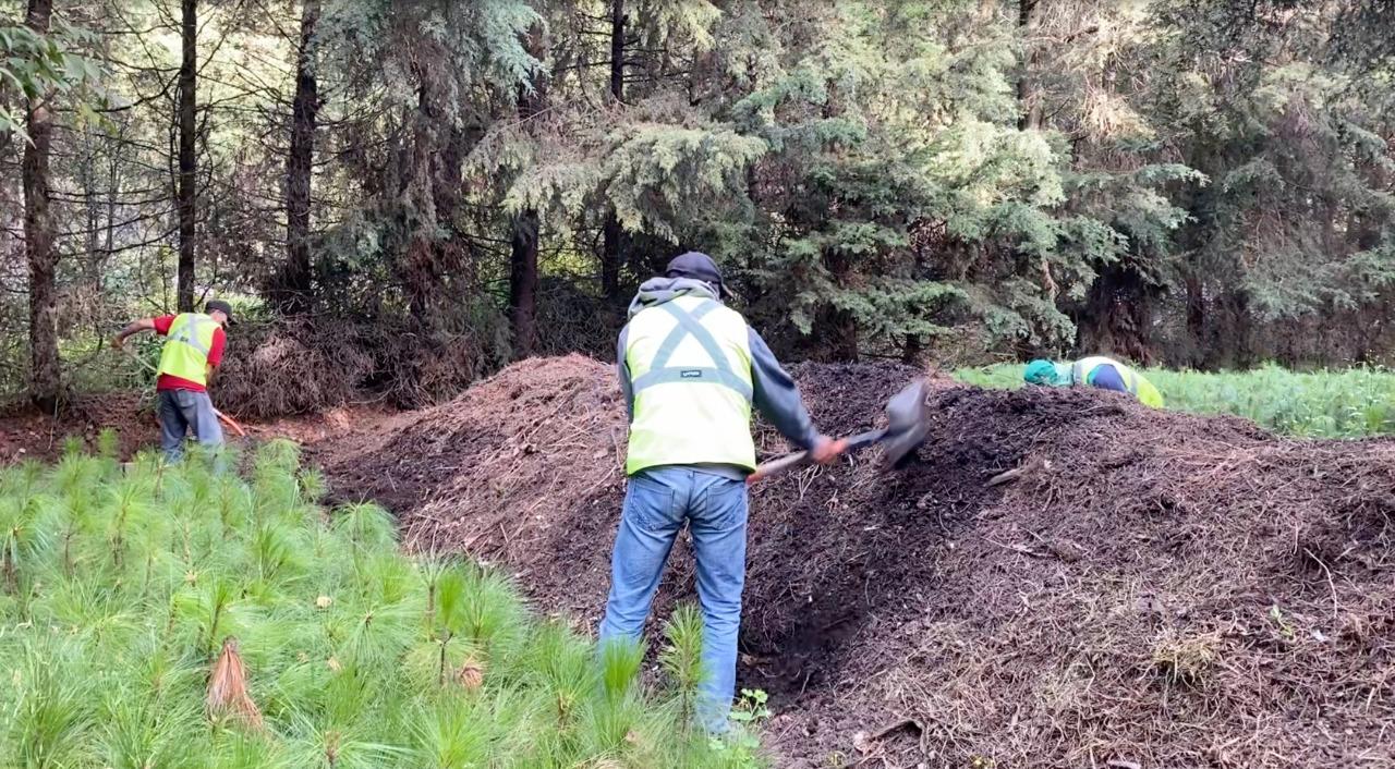 Con el proceso de compostaje se cierra el ciclo de un árbol de Navidad y garantizamos que regrese a la tierra.