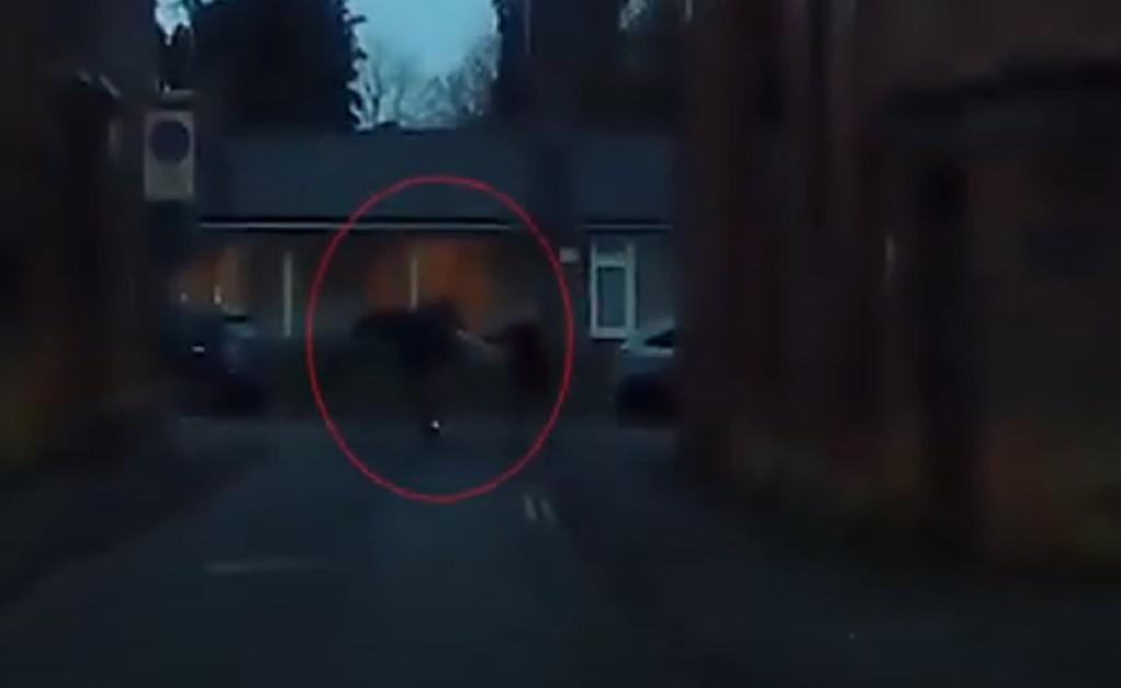 Ladrón es golpeado con unas muletas por una mujer de 77 años    VIDEO