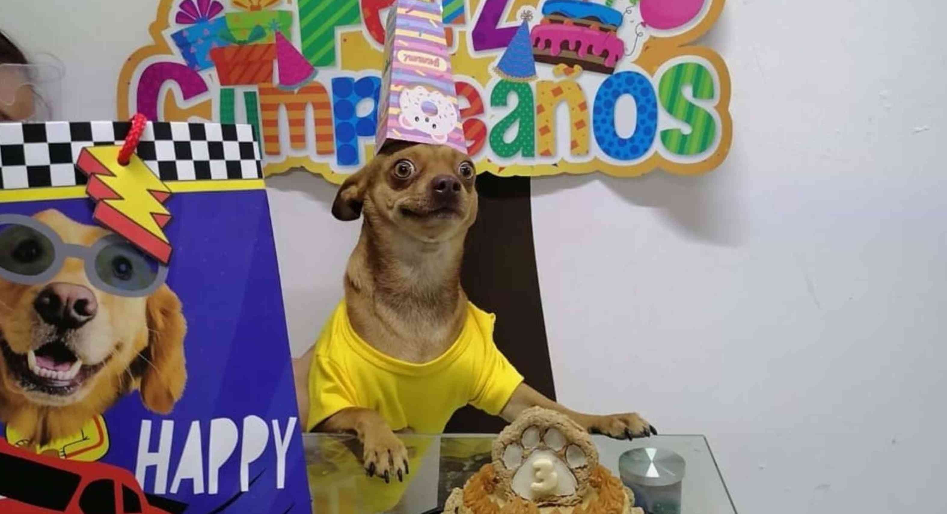 Celebran un cumpleaños perruno