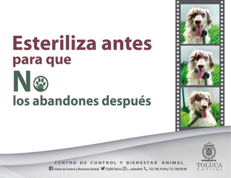toluca-esteriliza-perros-y-gatos