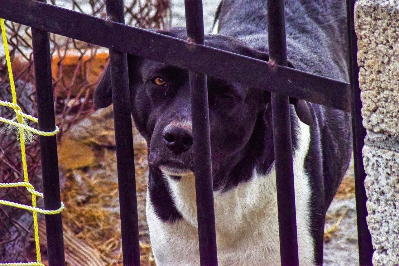 edomex-denuncian-presunta-secta-que-sacrifica-perros-para-rituales-160494