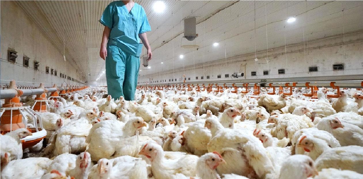 gripe-aviar-detectada-en-rusia-contagio-humano