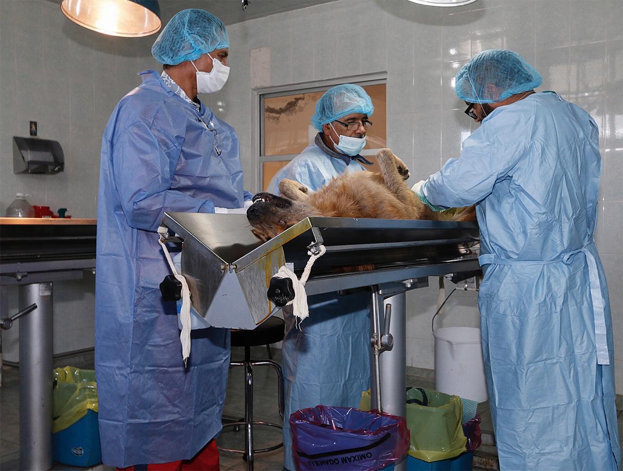 toluca-esteriliza-y-vacuna-a-tus-perros-y-gatos-aqui-te-decimos-como-sacar-tu-cita-160494