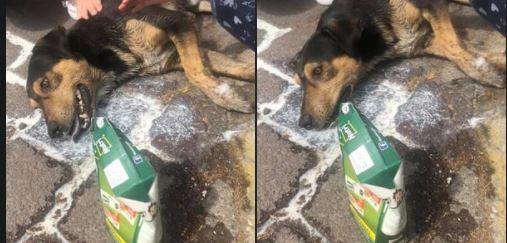 Toluca: Siguen casos de envenenamiento a perritos