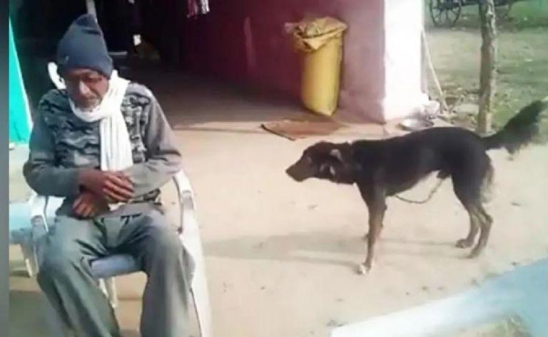 viral-abuelito-deja-todos-sus-bienes-a-su-perro-fue-el-unico-que-lo-cuido-160494