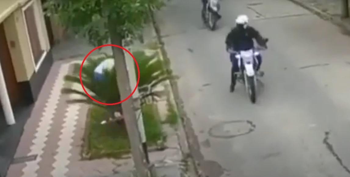 Delincuente causa risa al intentar huir de la policía ocultándose detrás de una palmera    VIDEO
