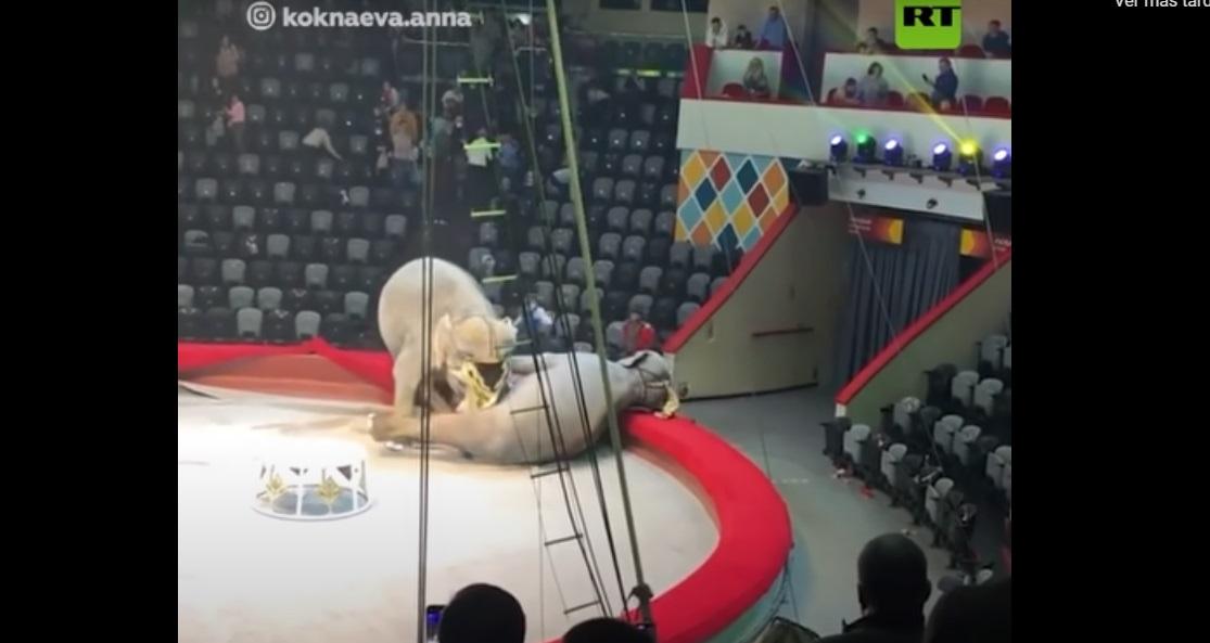 Elefantes pelean en pleno espectáculo de circo en Rusia    VIDEO