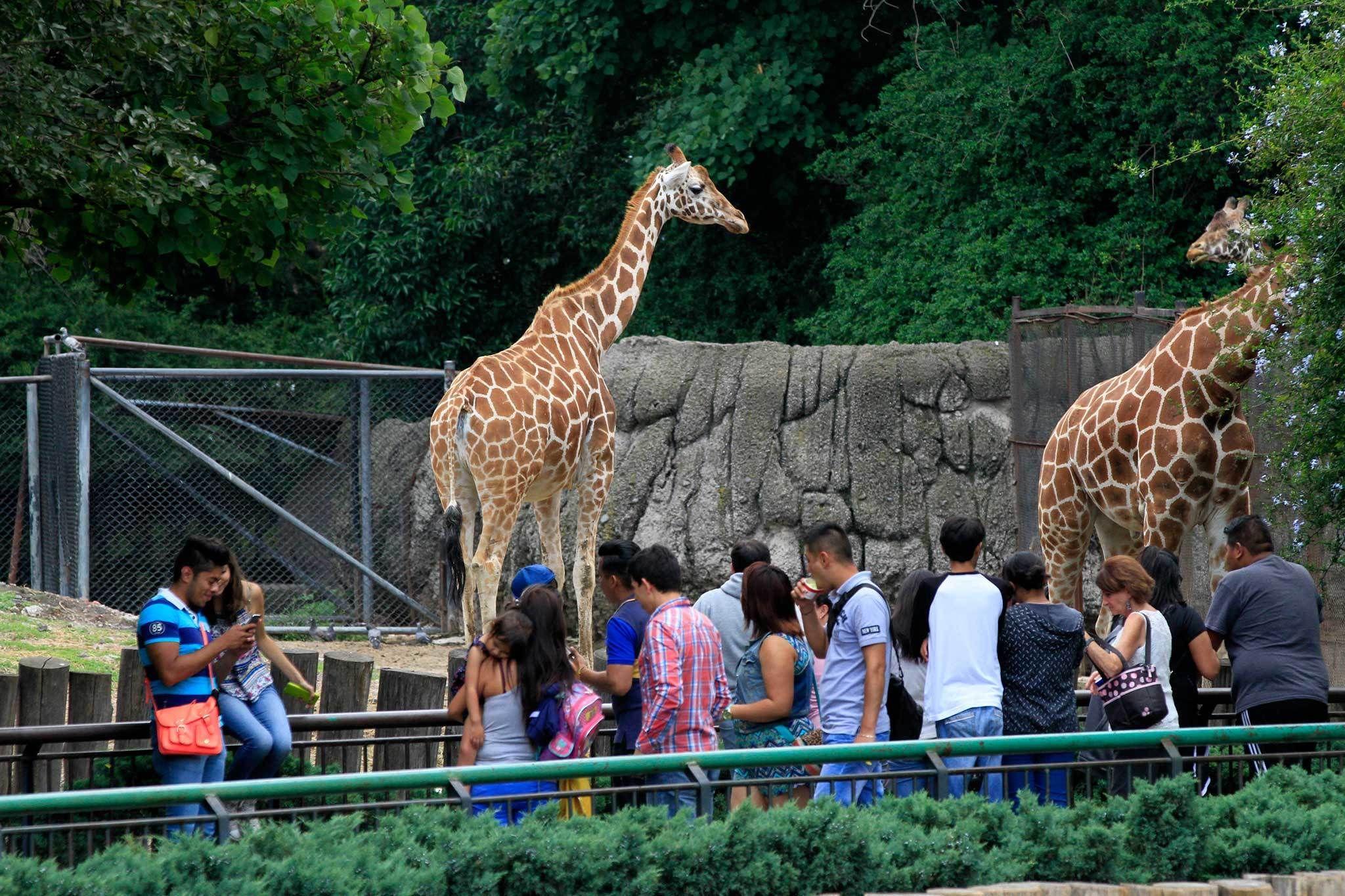 Déjate sorprender está Semana Santa 2021 por los zoologicos y acuarios de CDMX