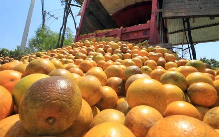 Gran cantidad de naranjas en la central de abastos