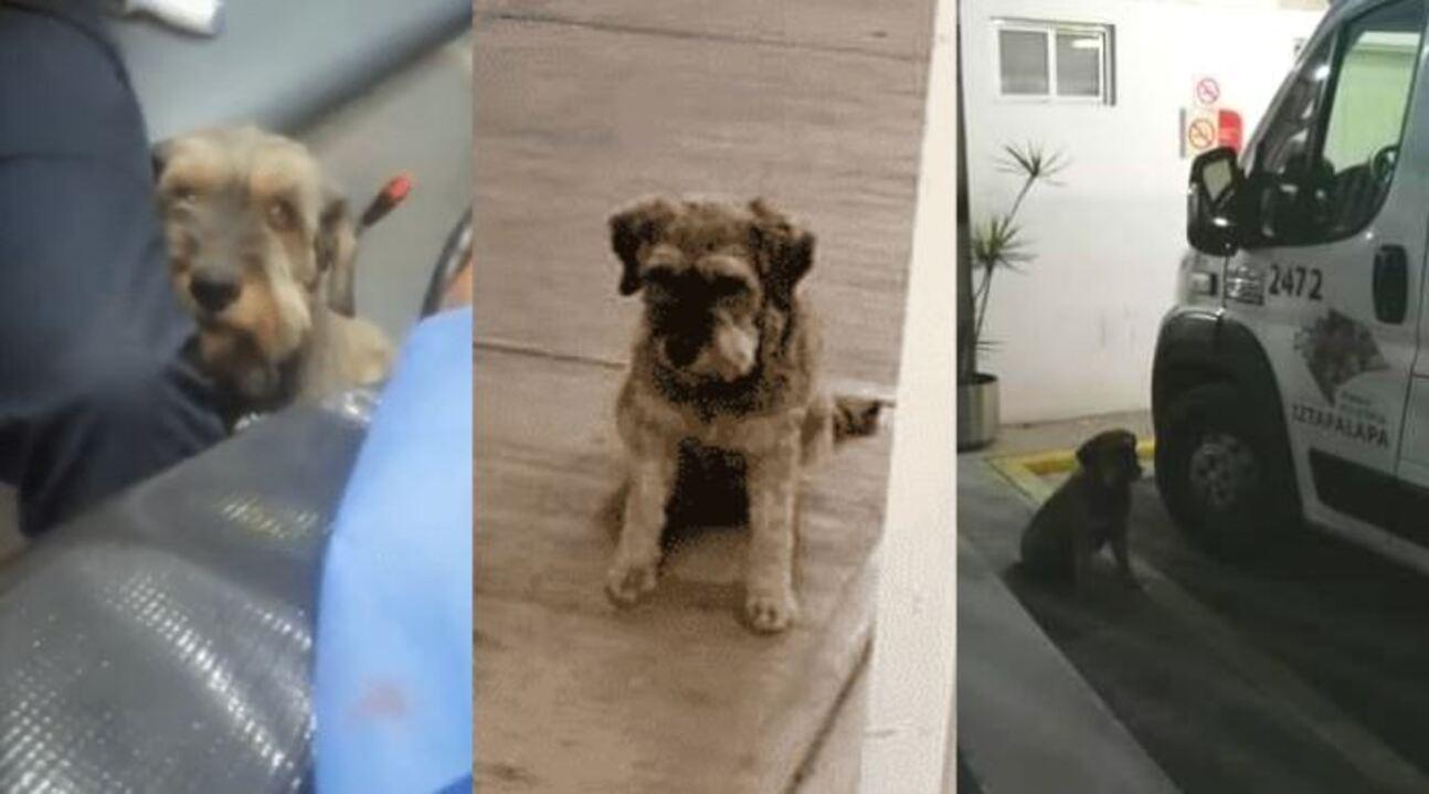 Un perrito de la alcaldía Iztapalapa corrió atrás de una ambulancia para no dejar solo a su dueño luego de sufrir un accidente
