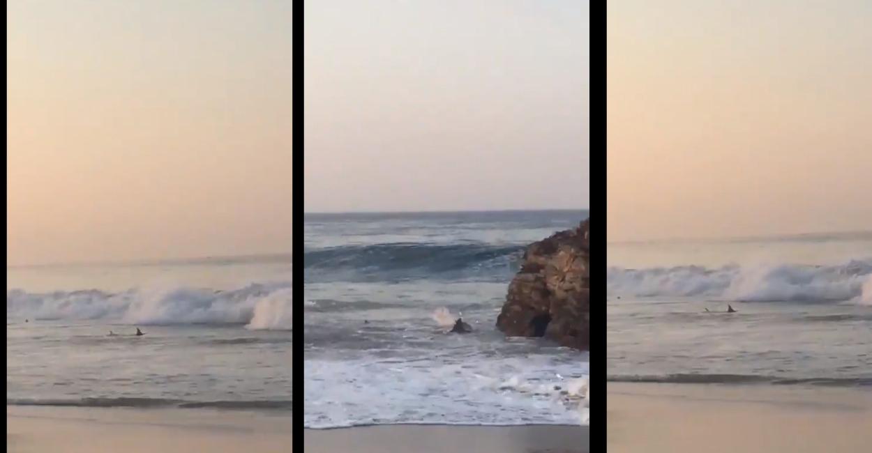 Playa de Oaxaca – se avistan tiburones en la orilla || VIDEO