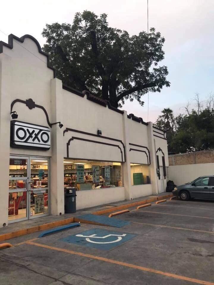 Viral Conoce el OXX0 con un árbol dentro