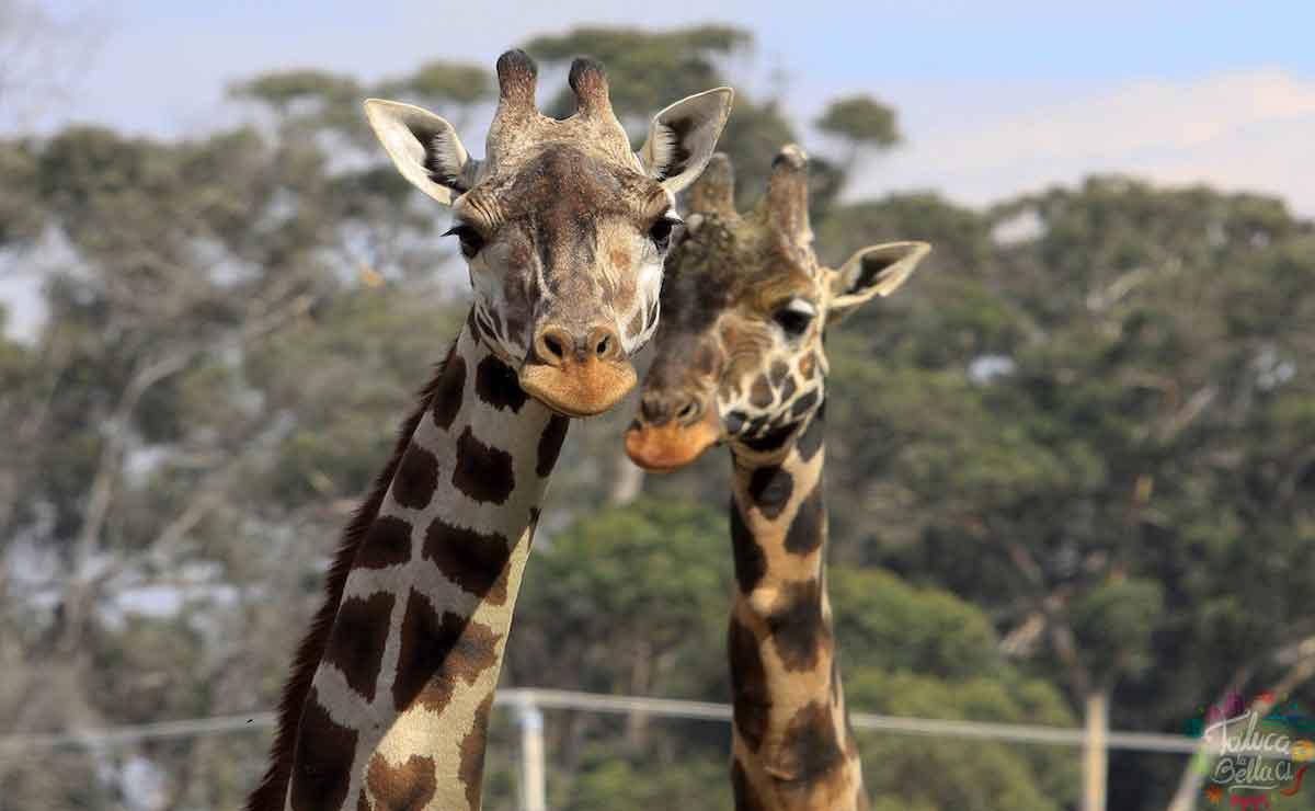 Disfruta de cerca a tus animales favoritos en el Zoológico de Zacango