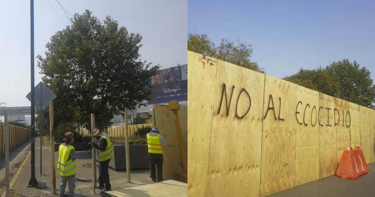 Quieren evitar la tala de cientos de árboles en Av. Pino Suárez en Toluca