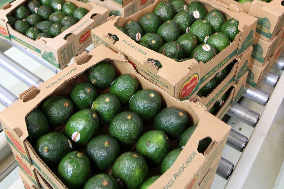 El aguacate es uno de los alimentos más vendidos en la cdmx