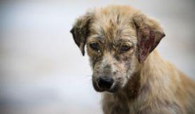 Una ONG en Puebla denuncio el maltrato hacia un perro por parte de una mujer
