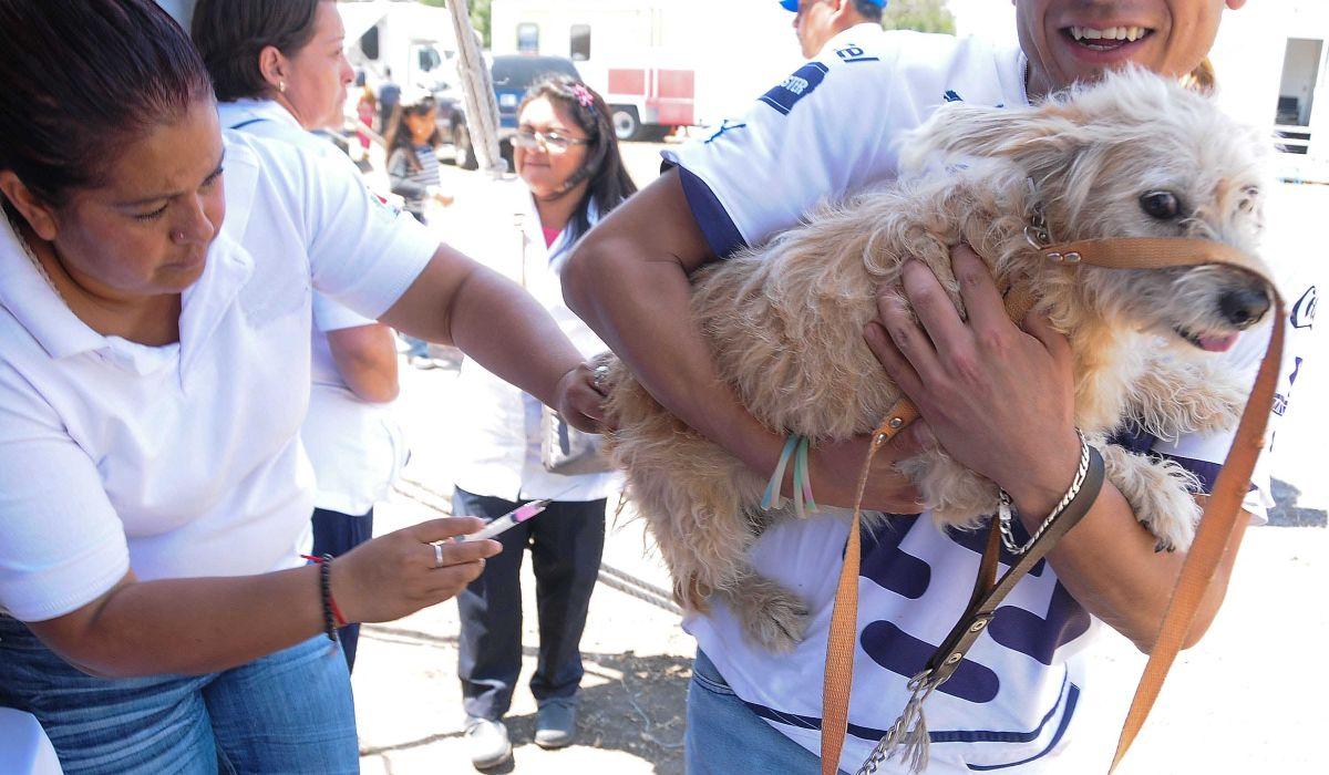 Campañas de esterilización de perros y gatos en el EDOMEX