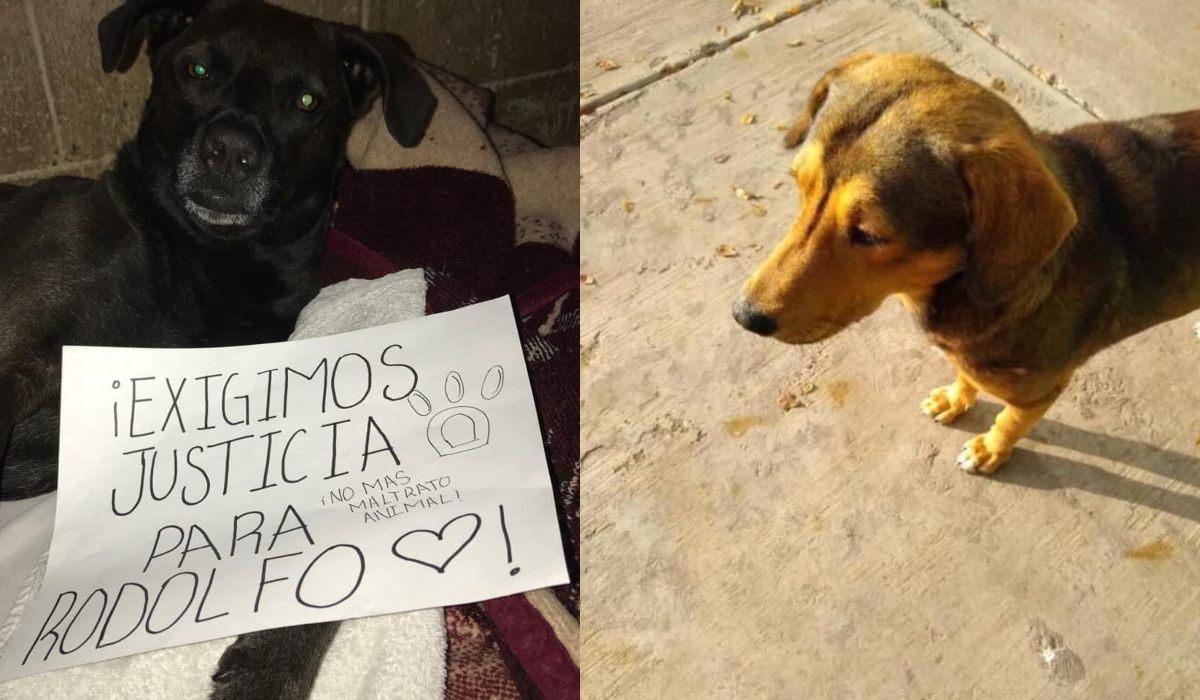 Hombre mata brutalmente a un perrito con un hacha || VIDEO