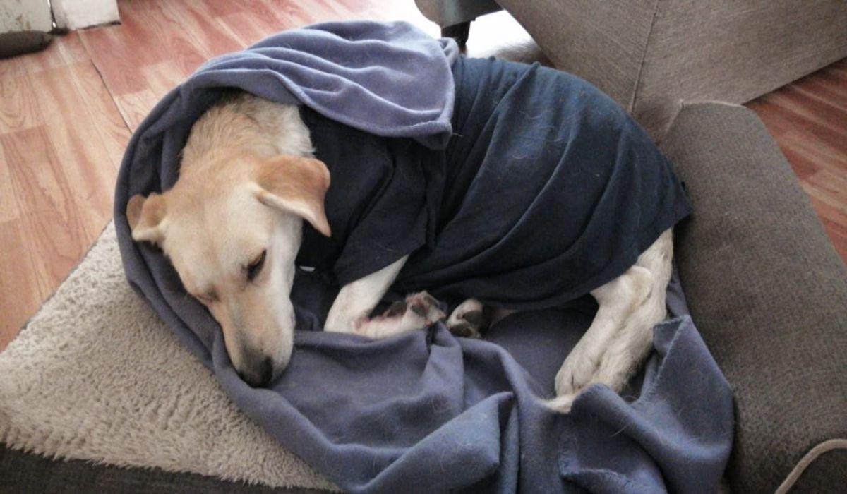 9 perros fueron atendios despues de haber sido envenenados