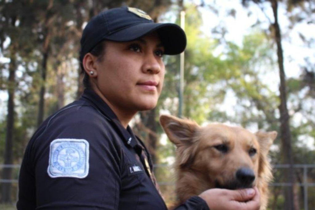El trbajo de los brigadistas para cuidar animales entre los principales están perros y gatos
