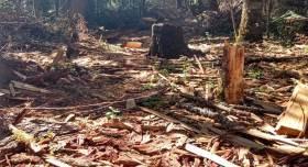 nevado de toluca y un sin fin de zonas ejidales como el ejido de buenavista, perteneciente a zinacantepec y a la área de protección de flora y fauna del nevado de toluca, sufren día con día la tala ilícita de árboles, además de los fuertes incendios que afectan a los árboles y al área protegida por la CONANP